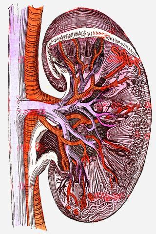 Bệnh thận và đái tháo đường: phần 7 – Chẩn đoán giai đoạn bệnh thận do ĐTĐ, tổn thương thận cấp, biến chứng bệnh thận mạn